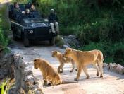 Tham quan khu bảo tồn thiên nhiên rộng lớn tại Nam Phi
