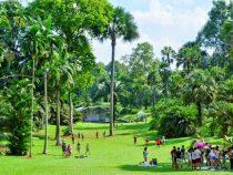 Khu vườn thực vật đáng để tham quan du lịch tại Singapore
