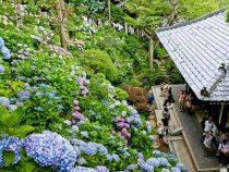 Tham quan chùa Hase linh thiêng tại Nhật Bản