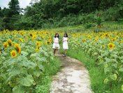 Thiên đường du lịch Yang Bay đẹp ngất ngây tại Nha Trang