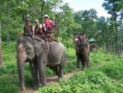 Hành trình thăm quan công viên Voi bằng vé máy bay đi Thái Lan giá rẻ