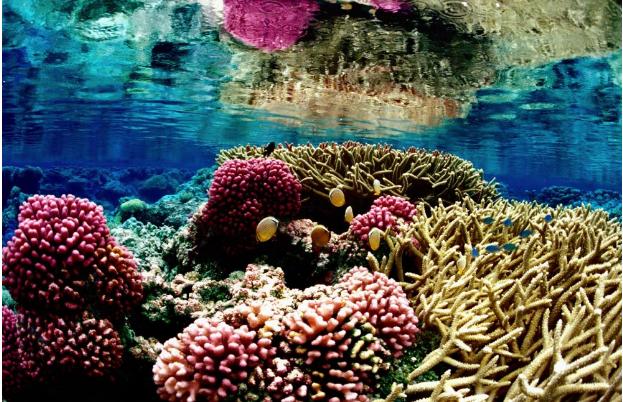 Du lịch khám phá rặng san hô lớn nhất thế giới tại Úc