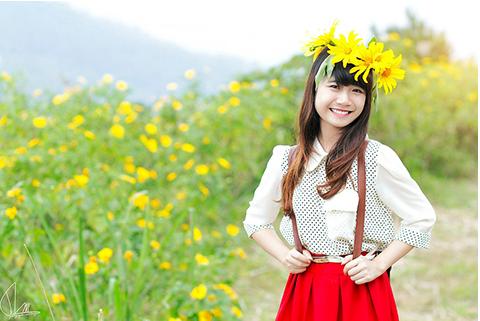 Thưởng thức hoa Dã Quỳ xinh đẹp ở Hà Nội