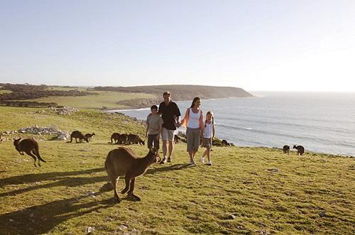 Đảo Kangaroo thiên đường khám phá lý tưởng tại Úc